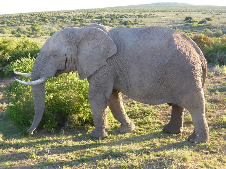 Addo Elephant Park. Photo