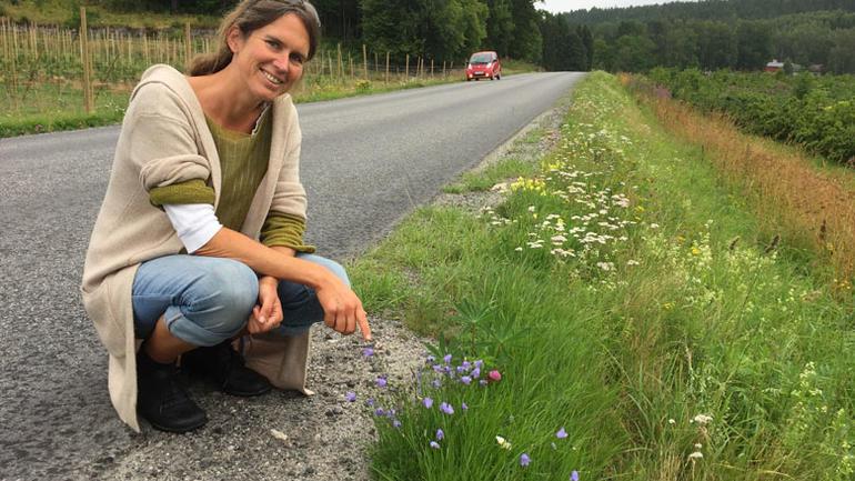 Bilde av Stefanie Reinhardt i veikant med blåklokker og rødkløver