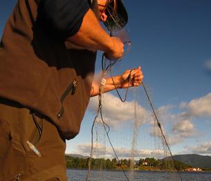 Atle Økelsrud samler inn fisk