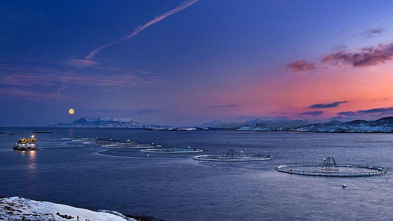 Havbruk. Foto. Wikimedia Commons/Kommunikasjonsavdelingen, Nord-Trøndelag fylkeskommune
