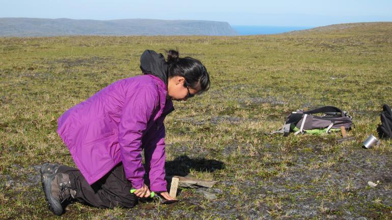 Gauri Bandekar held her på med økologiske undersøkingar på Nordkapp-platået. Undersøkingane indikerer at lyngheiene nord for skoggrensa i Finnmark ikkje er i samsvar med dei økologiske forholda som karakteriserer arktisk vegetasjon. Foto: Arvid Odland