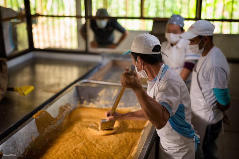 Fairtrade bidrar til å sikre. Foto: Juan Munoz